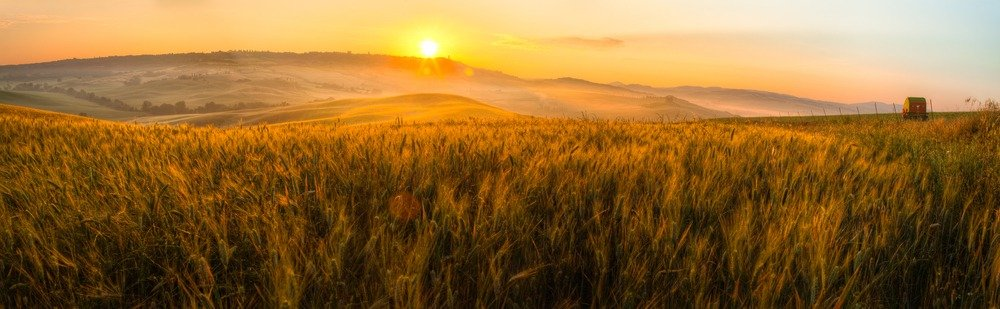A wheat field in Italy at sunrise.